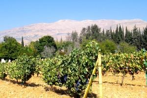 Bekaa-Ebene: Der Weinkeller des Libanon