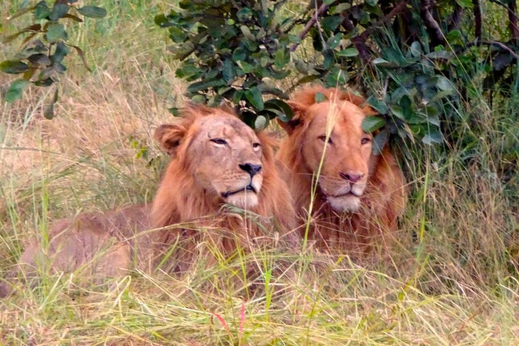 South Luangwa Nationalpark Sambia