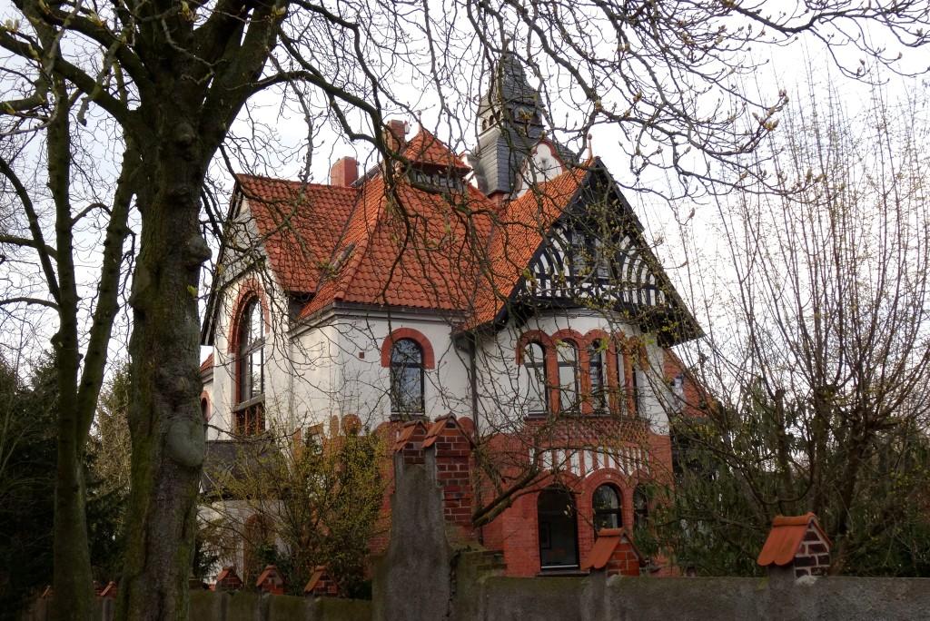Scilla-Blüte Hannover Lindener Berg