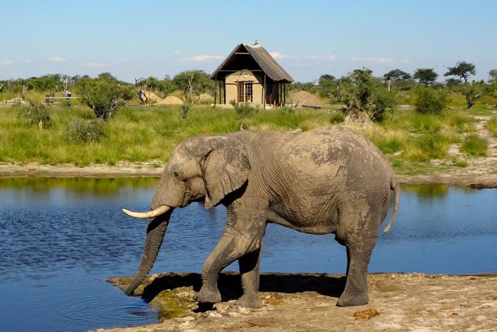 Elefanten in Botswana
