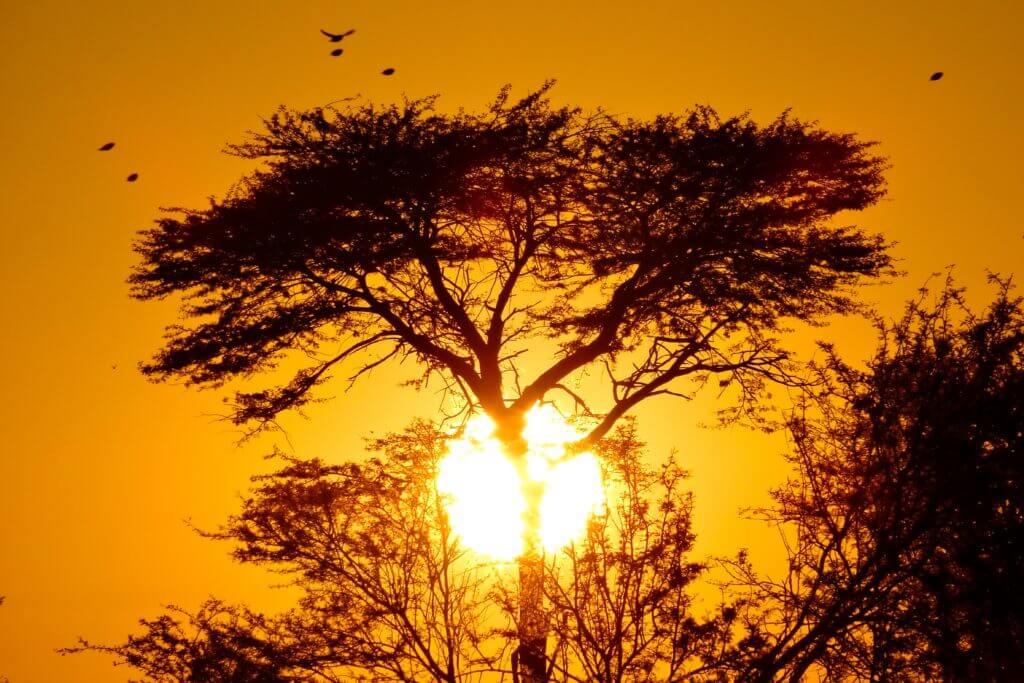 Morgensonne in Botswsana
