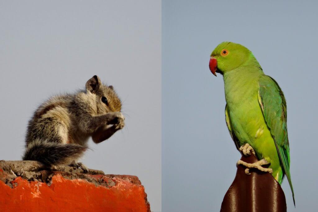 Papagei und Streifenhörnchen im Roten Fort in Agra