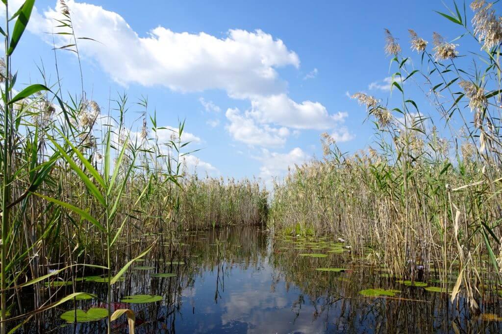 Okavango Delta: Impressionen aus dem Feuchtgebiet