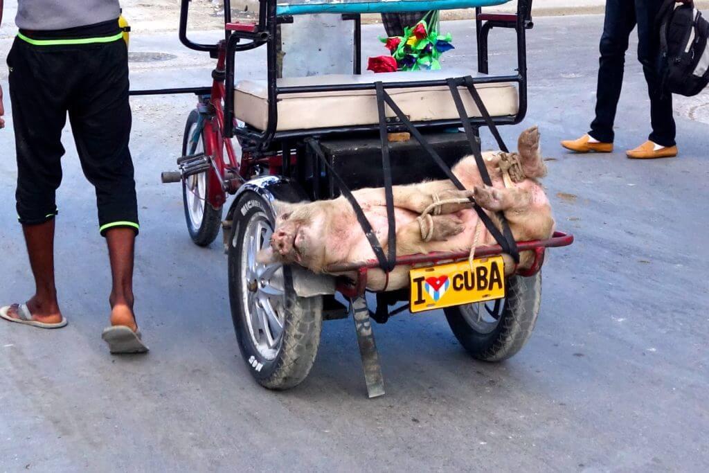 Jahresrückblick Reiseblog Groovy Planet. Schweinetransport in den Straßen von Guantánamo, Kuba