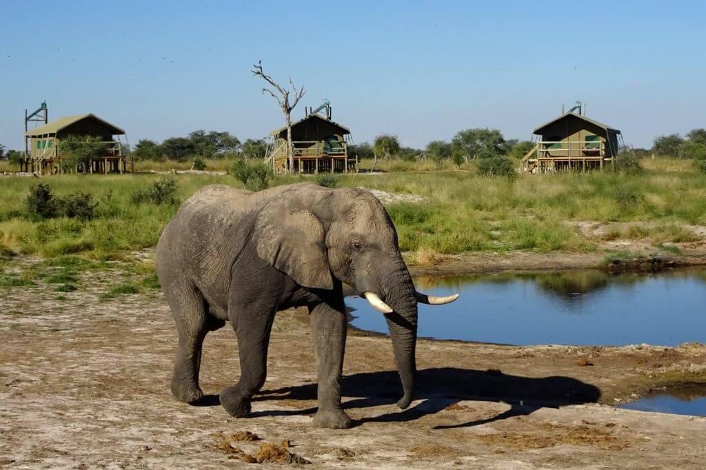 Jahresrückblick Reiseblog Groovy Planet, Elefant im Safari-Camp Elephant Sands, Botswana