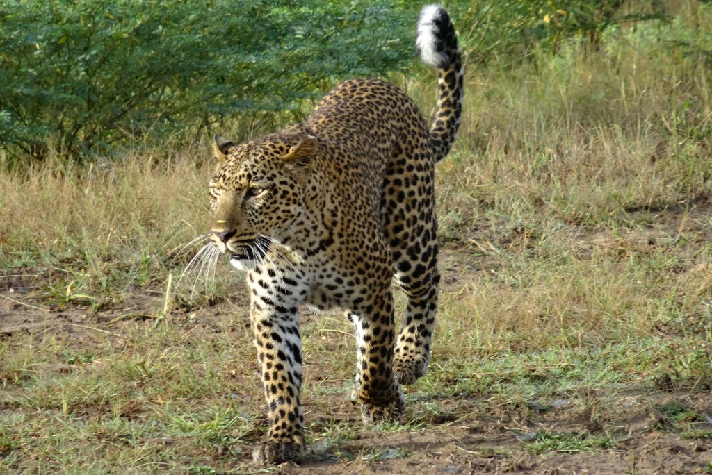 South Luangwa Nationalpark Sambia