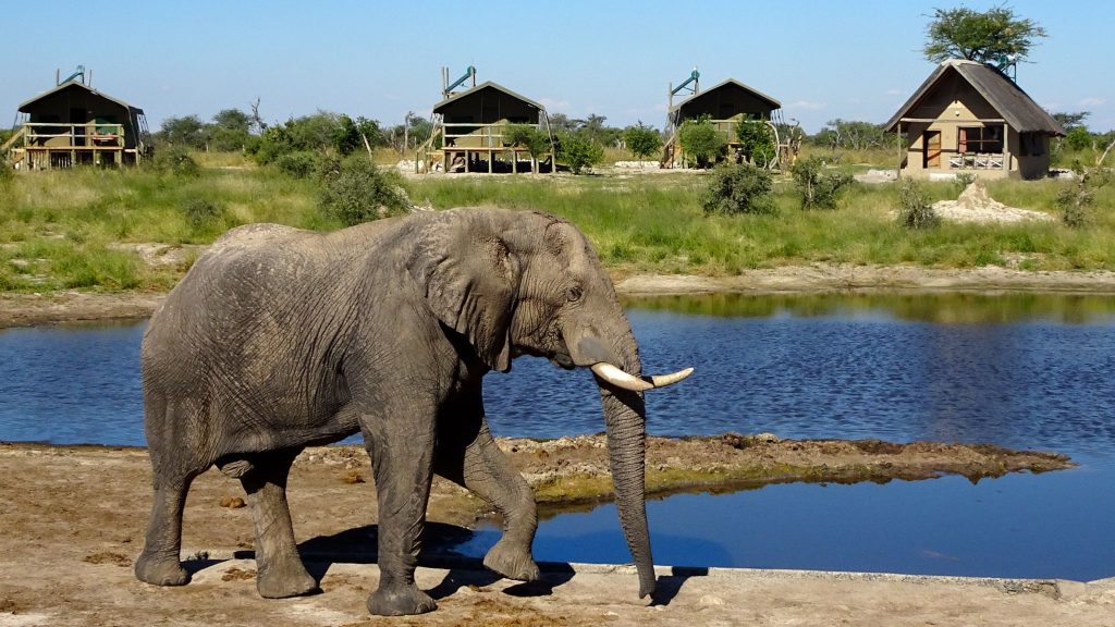 Elefant im Bush Camp Elephant Sands, Botswana.