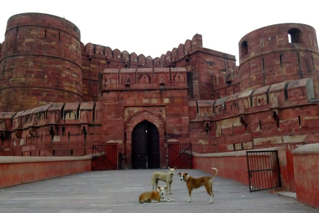 Hunde vor dem Roten Fort in Agra