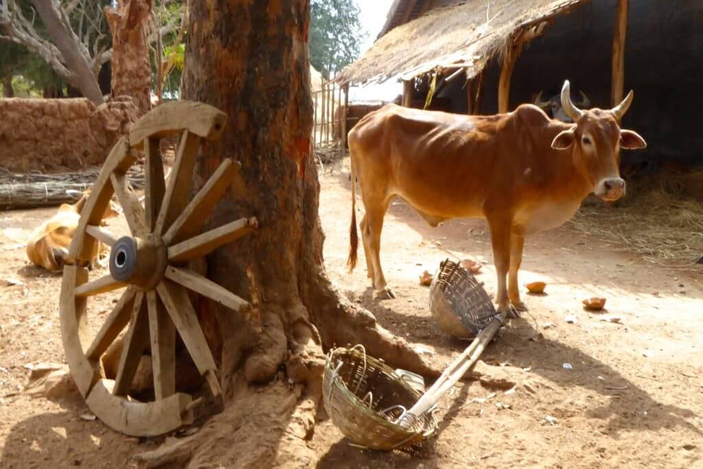 Kultur in Indien: Ländliche Idylle im Bastar Distrikt