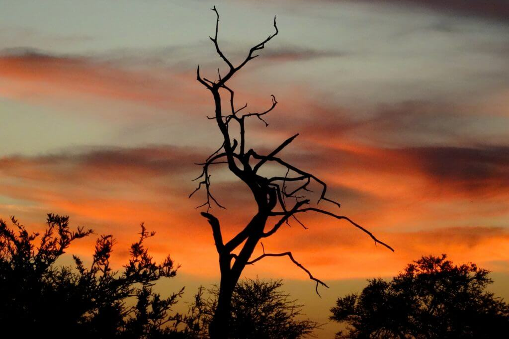 Jahresrückblick Reiseblog Groovy Planet, Abendstimmung in Botswana