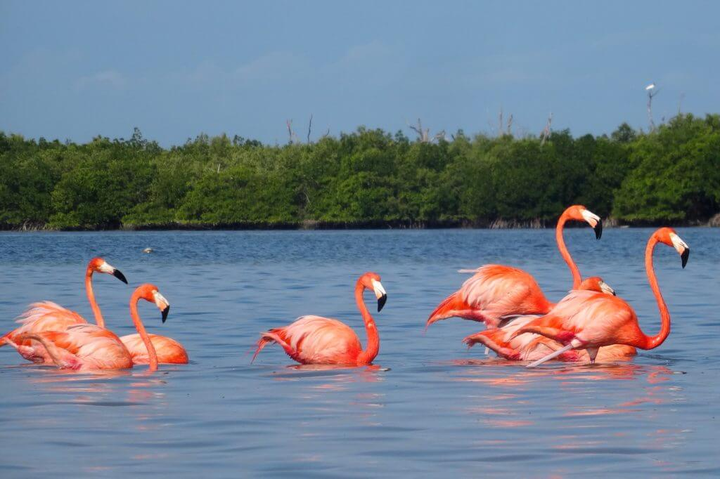 Flamingos bei Río Lagartos, Yucatán.