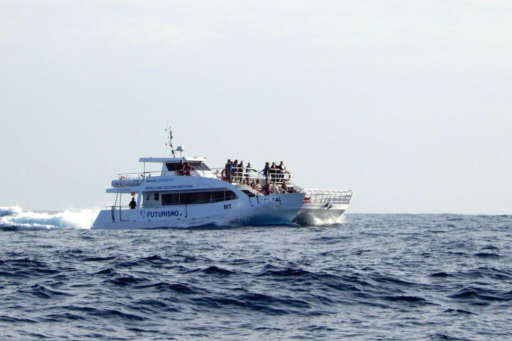 Whale Watching: Boot im Gewässer vor der Azoren-Insel São Miguel.