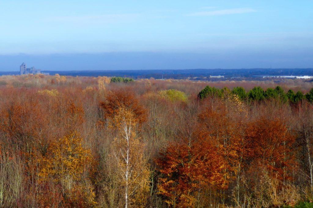 Waldgebiet am Kronsberg in Hannover.