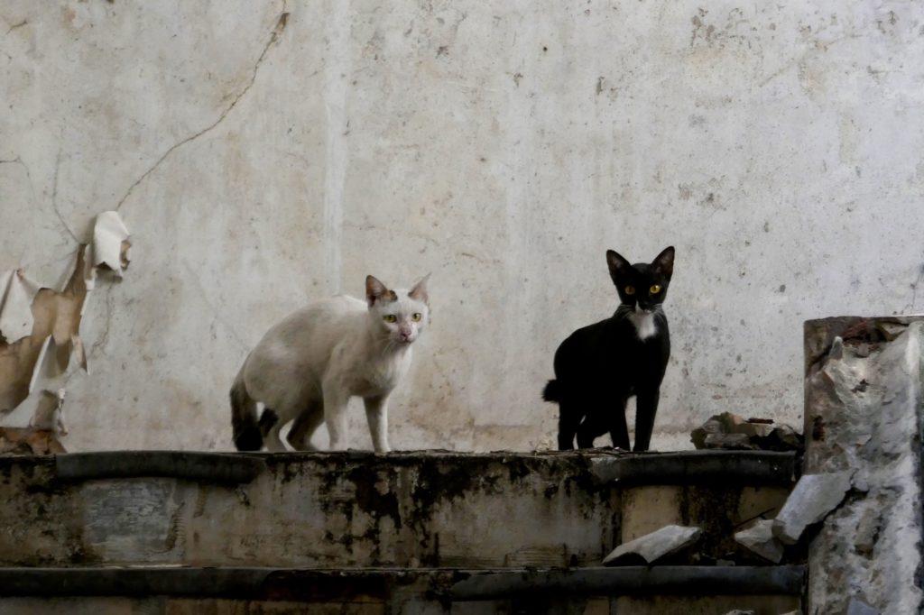 Ehemaliges Kaufhaus New World. Zwei Katzen im Inneren des Gebäudes.