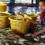Auf dem Fischmarkt in Ranong, Thailand.