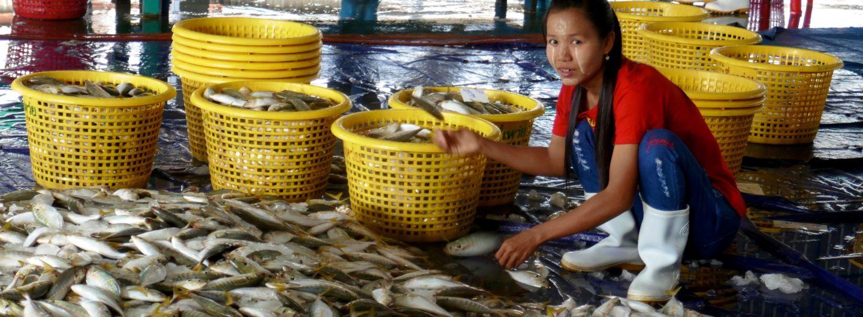 Der Fischmarkt von Ranong: Wo die Kisten fliegen lernen