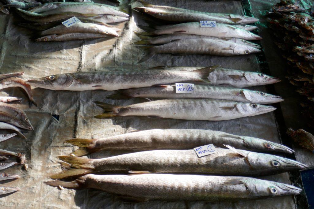 Fische auf dem Fischmarkt von Ranong.