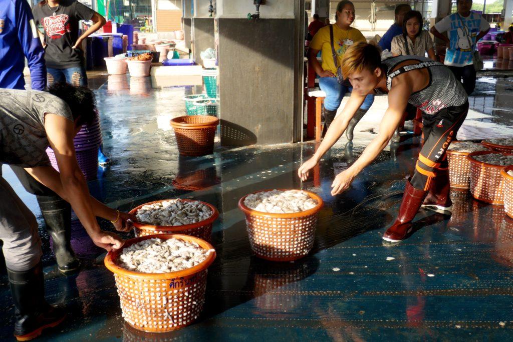 Fischmarkt in Ranong. Verkaufsfertige Tintenfische.