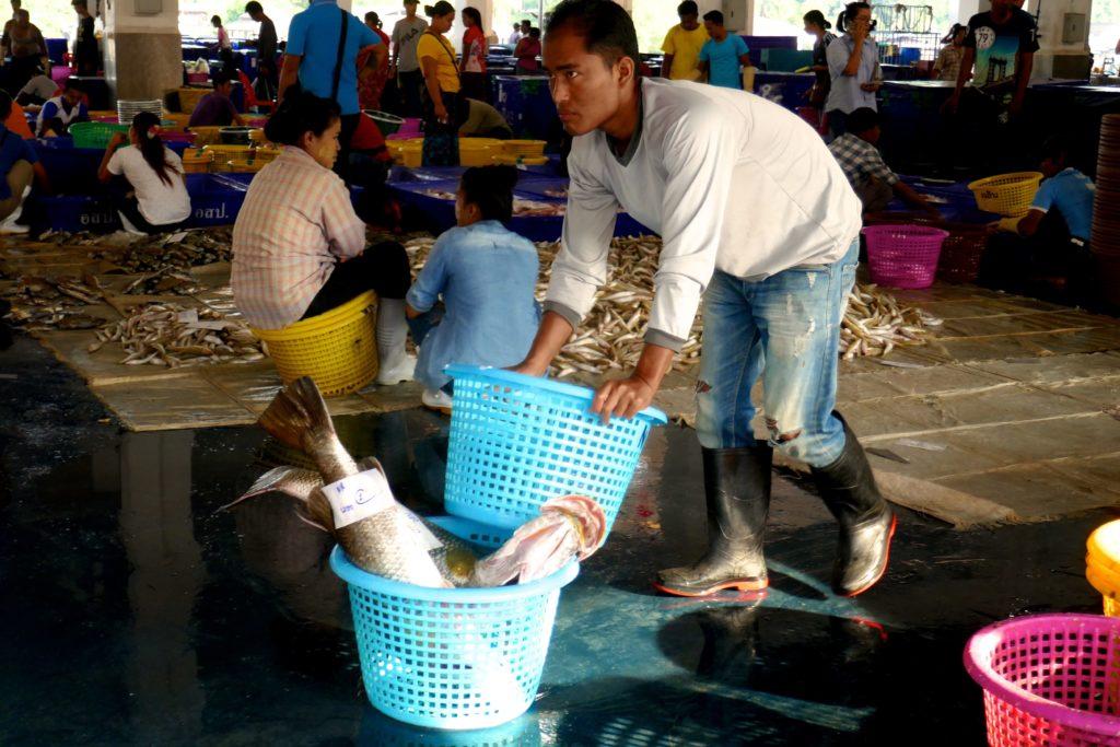 Fischmarkt von Ranong. Überall wird kräftig angepackt.