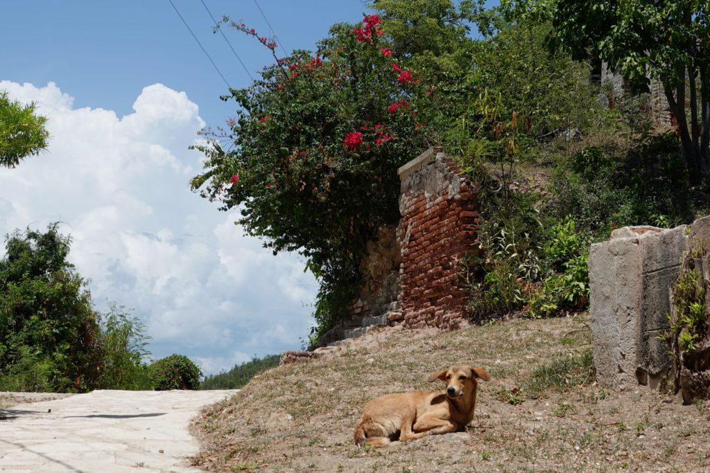 Unterwegs auf Cayo Granma: ein Hund am Wegesrand.