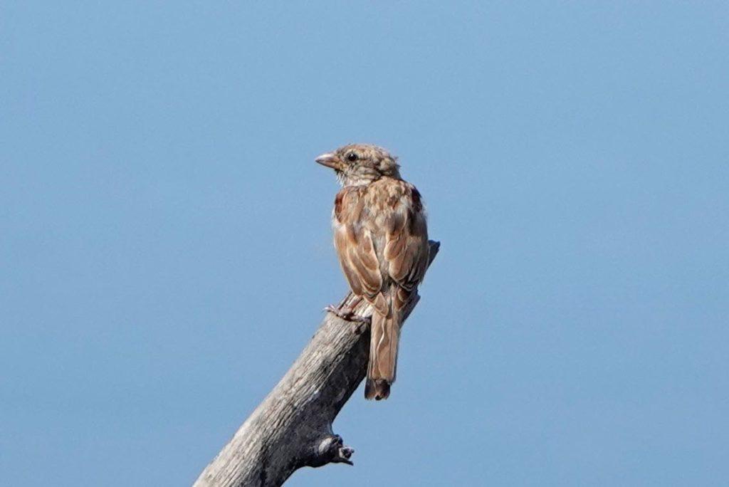 Unbekannte Vogelart im Uferbereich von Santiago de Cuba.