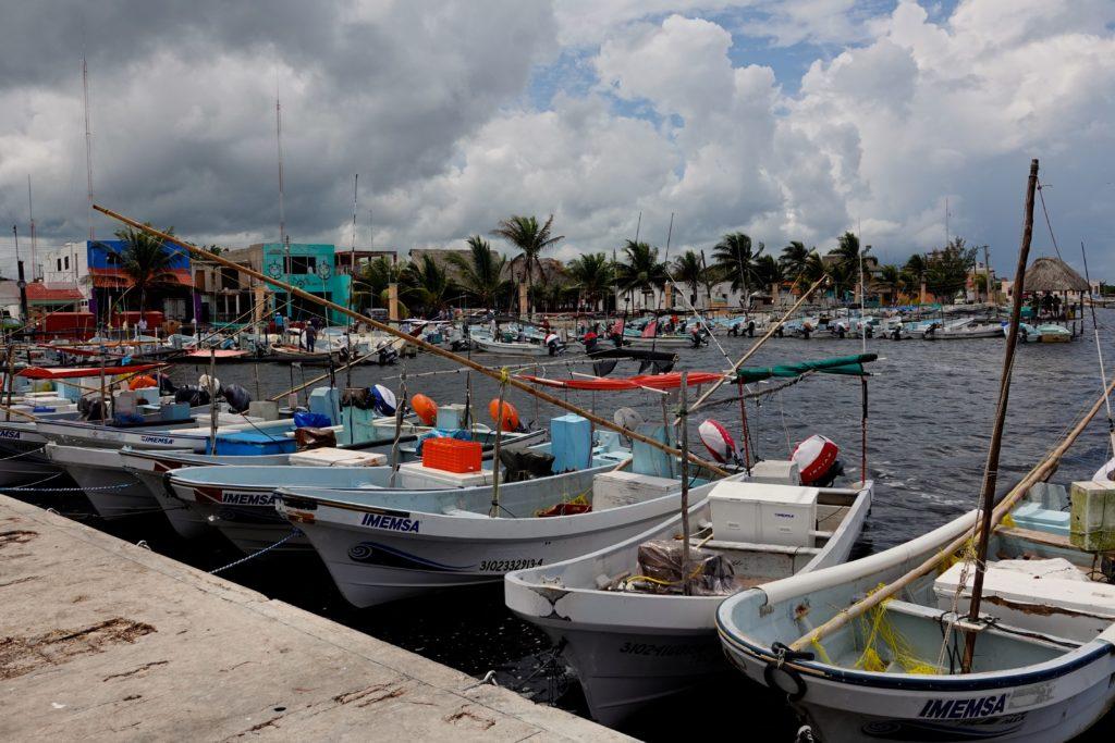 Krokodil-Alarm im Fischerort San Felipe | Groovy Planet