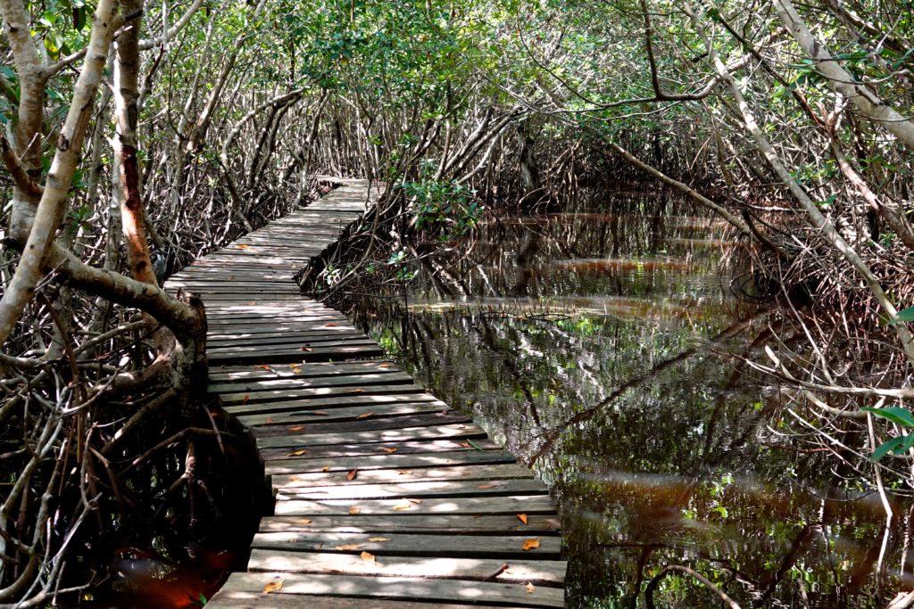 Auf dem Sendero Punta Morena hinein in die Mangrovenwildnis von San Felipe
